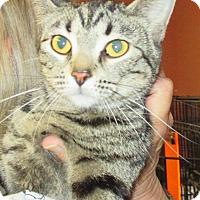 Adopt A Pet :: Eva - Reeds Spring, MO