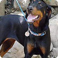 Adopt A Pet :: Brisa - Fillmore, CA