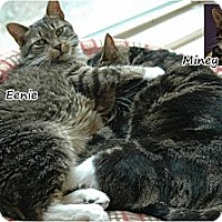 Adopt A Pet :: Eenie and Miney - Oyster Bay, NY