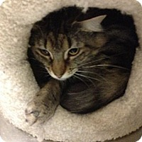 Adopt A Pet :: Elvira - Pittstown, NJ