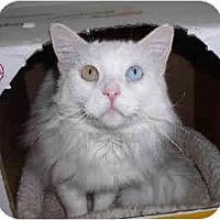 Adopt A Pet :: Matoskah - Davis, CA
