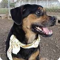 Adopt A Pet :: Dolly - Antioch, IL