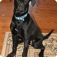 Adopt A Pet :: Shadow - Hamilton, ON