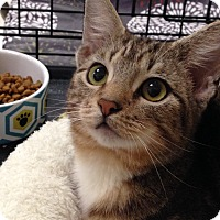 Adopt A Pet :: Rufus - Foothill Ranch, CA