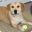 Adopt A Pet :: Dupree