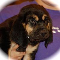 Adopt A Pet :: Andi - Phoenix, AZ