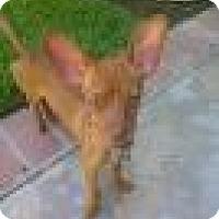 Adopt A Pet :: Rex - Lomita, CA