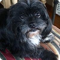 Adopt A Pet :: Alphie - Cerritos, CA
