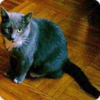 Adopt A Pet :: Kizzie - Brooklyn, NY