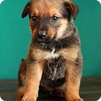 Adopt A Pet :: Hilfiger - Waldorf, MD
