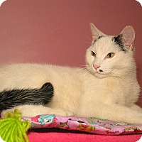 Adopt A Pet :: MAX - Milford, MA