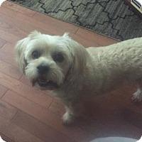 Adopt A Pet :: Evonna - Rochester, NY