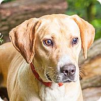 Adopt A Pet :: Rocky - Cincinnati, OH