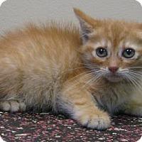 Adopt A Pet :: Jo - Gary, IN