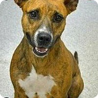 Adopt A Pet :: Abby - Troy, MI