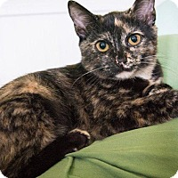 Adopt A Pet :: Christian aka Gracie - Windsor, CT