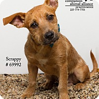 Adopt A Pet :: Scrappy - Baton Rouge, LA