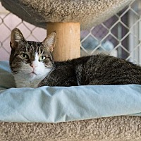 Adopt A Pet :: Cocoa - Freeport, NY