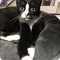 Adopt A Pet :: Elle - Wayne, NJ