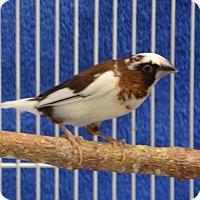 Adopt A Pet :: Flansburgh - Englewood, FL