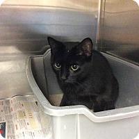 Adopt A Pet :: Ira - Janesville, WI