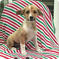 Adopt A Pet :: Paige - Spring Valley, NY