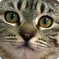 Adopt A Pet :: Happy VALENTINE'S SPECIAL! 50% - Republic, WA