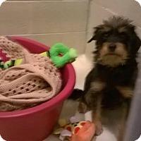 Adopt A Pet :: Willie - Newport, KY