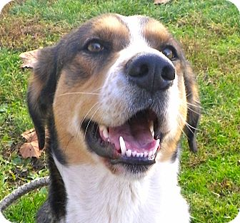Border Collie/Shepherd (Unknown Type) Mix Dog for adoption in Metamora, Indiana - Dell