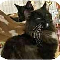 Adopt A Pet :: C C - Sacramento, CA