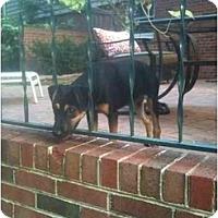 Adopt A Pet :: Beth - Alexandria, VA