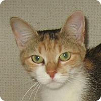 Adopt A Pet :: KALI-2012 - Hamilton, NJ