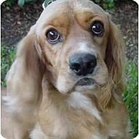 Adopt A Pet :: Todd - Sugarland, TX