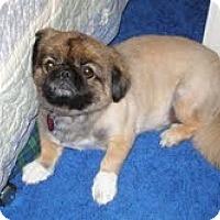 Adopt A Pet :: J.J. - Chantilly, VA