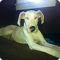 Adopt A Pet :: Scout - Phoenixville, PA