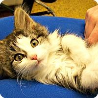 Adopt A Pet :: Crackle - Toledo, OH