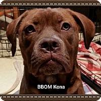 Adopt A Pet :: Kona - Arden, NC
