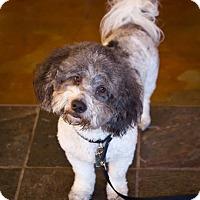 Adopt A Pet :: Cairo - Orange, CA