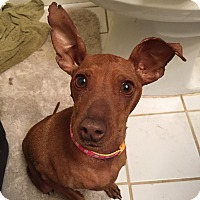 Adopt A Pet :: Sally - PENDING, in Maine - kennebunkport, ME