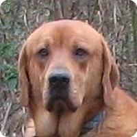 Adopt A Pet :: Roscoe - Pawling, NY