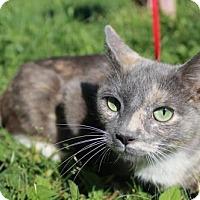 Adopt A Pet :: Freya - Dublin, VA