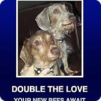 Adopt A Pet :: Joe & Jessie - Morrisville, PA
