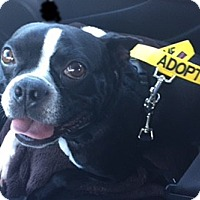 Adopt A Pet :: Crosby - Nashville, TN