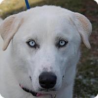 Adopt A Pet :: Sadie - Berkeley Heights, NJ