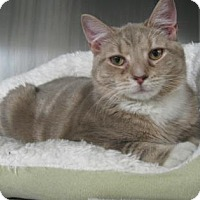 Adopt A Pet :: Duncan - Voorhees, NJ