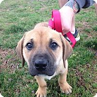 Adopt A Pet :: Dorothy Riley - PORTLAND, ME