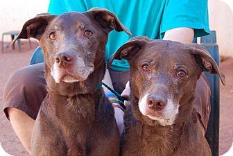 Labrador Retriever Mix Dog for adoption in Las Vegas, Nevada - Beloved