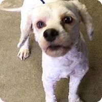 Adopt A Pet :: Floyd - Sugarland, TX