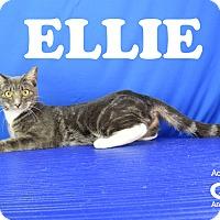 Adopt A Pet :: Ellie - Carencro, LA