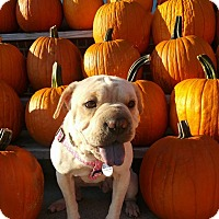 Adopt A Pet :: Genesis - Charlotte, NC